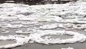 Ice looks like frosted donuts as it floats downstream in Manitoba