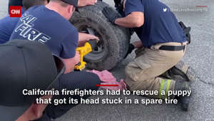 Puppy gets head stuck in wheel, firefighters step in