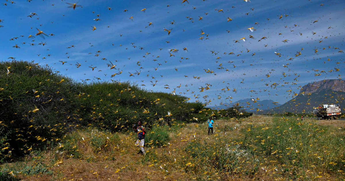 Locust plague in East Africa prompts UN to call for international aid