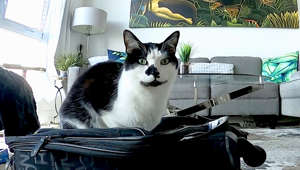 a cat sitting on top of a suitcase