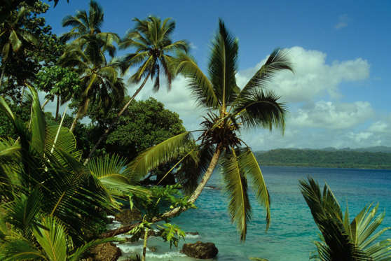 """So far, the island has been spared the fate of many of the Solomon Islands, which """"are being ravaged by rampant logging,"""" according to Conservation International amphibian expert Robin Moore. If you go, expect """"a glimpse of a true, pristine island paradise—you can swim with dugongs and shoals of black-tipped reef sharks"""" at Tetapare, Moore said."""