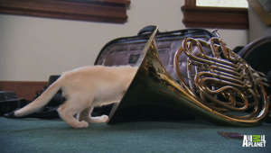 Melody's interesting use of a French horn