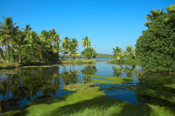 Slide 2 of 99: Backwaters in Kerala, India