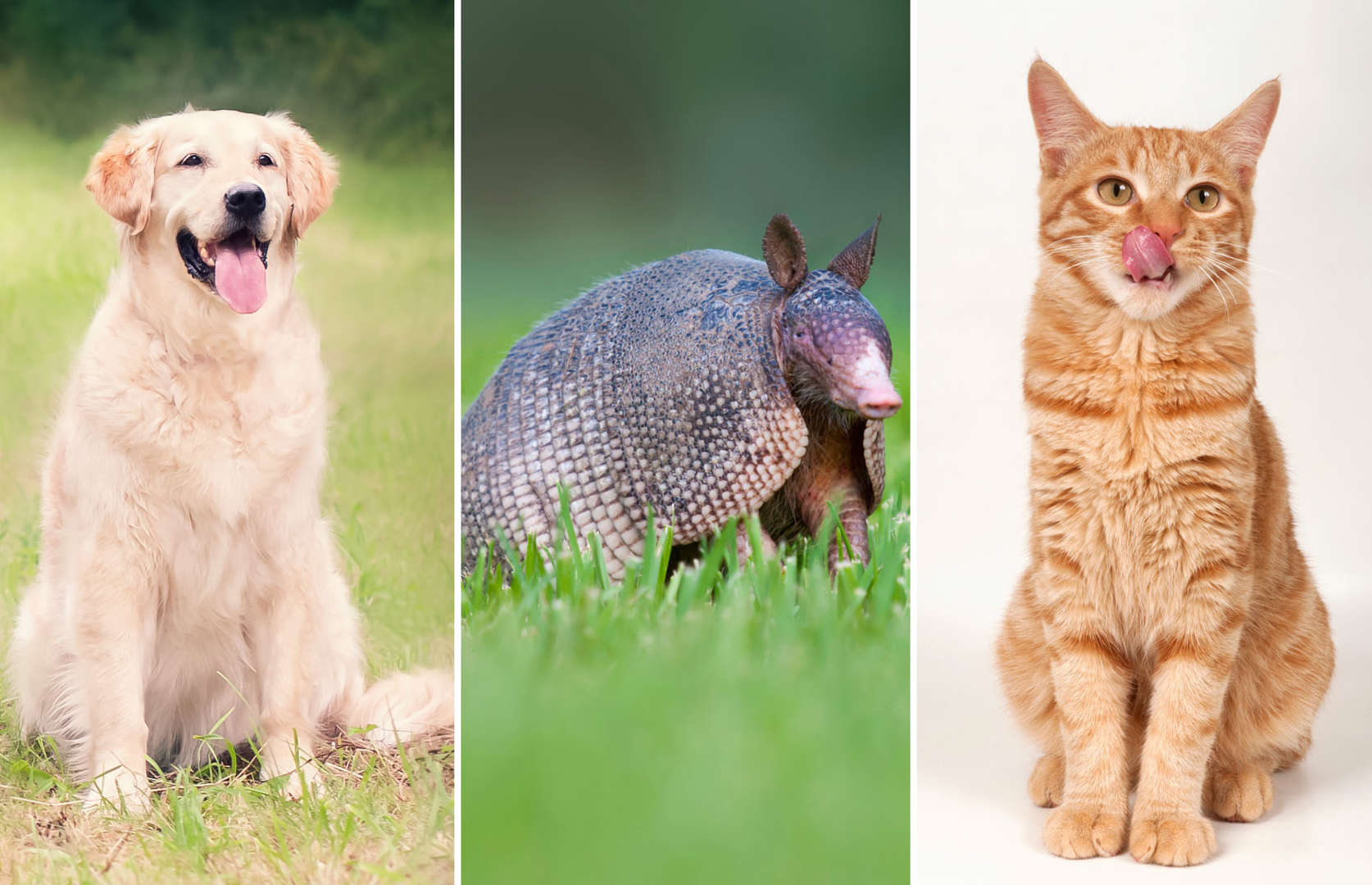 db8e5718 Bad blood: Animals that can infect humans