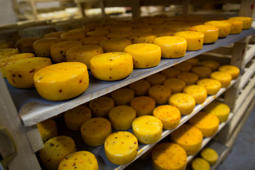 Cheese on the shelfs in a storage at John Kopiski's farm, in Krutovo village, Vladimir region. Russia has marked the one-year anniversary of its ban on Western agricultural products with an order to destroy contraband food.