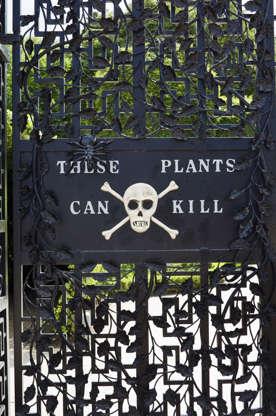 Διαφάνεια 8 από 24: Trekking jungle of poisonous plants in Britain