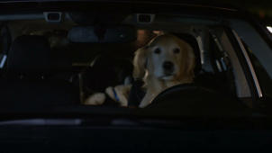 Subaru cars are now dog tested