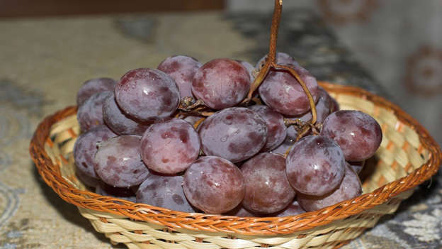 Diapositiva 22 de 30: Resveratrol is found in the skin of red grapes, as well as peanuts, pomegranates and raw cacao. It has anti-carcinogenic, anti-inflammatory and antioxidant benefits and looks potentially promising as an effective treatment against cancer. Of the grape varieties, muscadine grapes have the highest concentration of resveratrol.