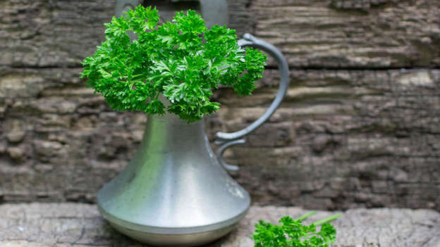 Diapositiva 19 de 30: The parsley herb has many health benefits: it's anti-inflammatory, anti-fungal, anti-viral and anti-spasmodic. It also contains apigenin, a flavonoid also found in celery, peppermint, thyme and chamomile tea, that could inhibit the growth – and shorten the lifespan of – specific cancer cells.
