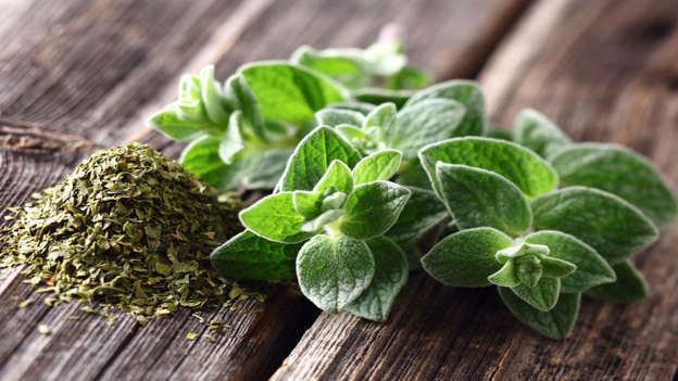 Diapositiva 18 de 30: This wonderfully fragrant green herb is laden with the phytochemical quercetin, which slows the growth of cancer and encourages apoptosis of cancer cells, a process by which certain cells are programmed to die.
