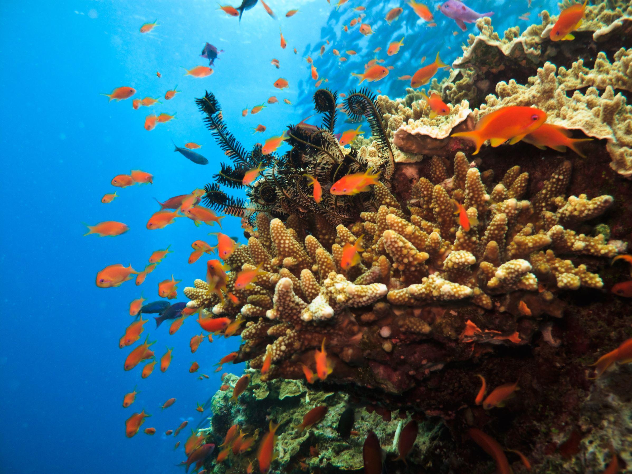 siti di incontri di pesce Australia Empire stars incontri Hakeem e Jamal