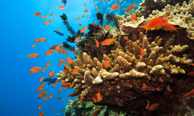 26 枚のスライドの 1 枚目: Stony Coral Colony and soldier fish Great Barrier Reef Australia