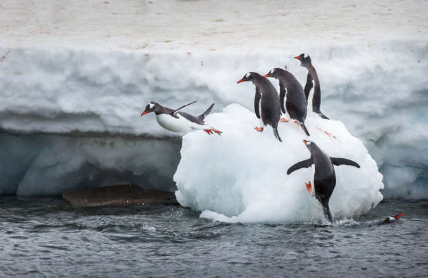25 adorable penguin pictures